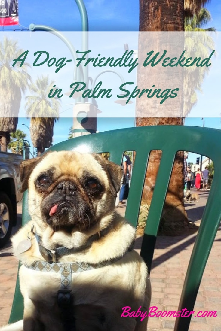 Palm Springs is dog friendly and you can find hotels and restaurants to accommodate your pooch. It's a fun place to relax and have a good time. #dogfriendly #weekendgetaway #California #PalmSprings #SouthernCalifornia #petfriendlyhotel