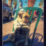 A Dog Friendly Weekend in Palm Springs