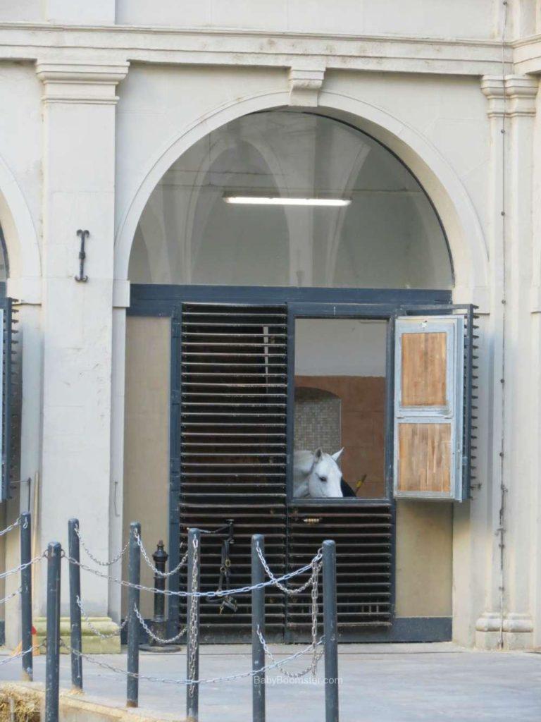 Baby Boomer Travel   Austria   Vienna - Lipizzaner Stallion