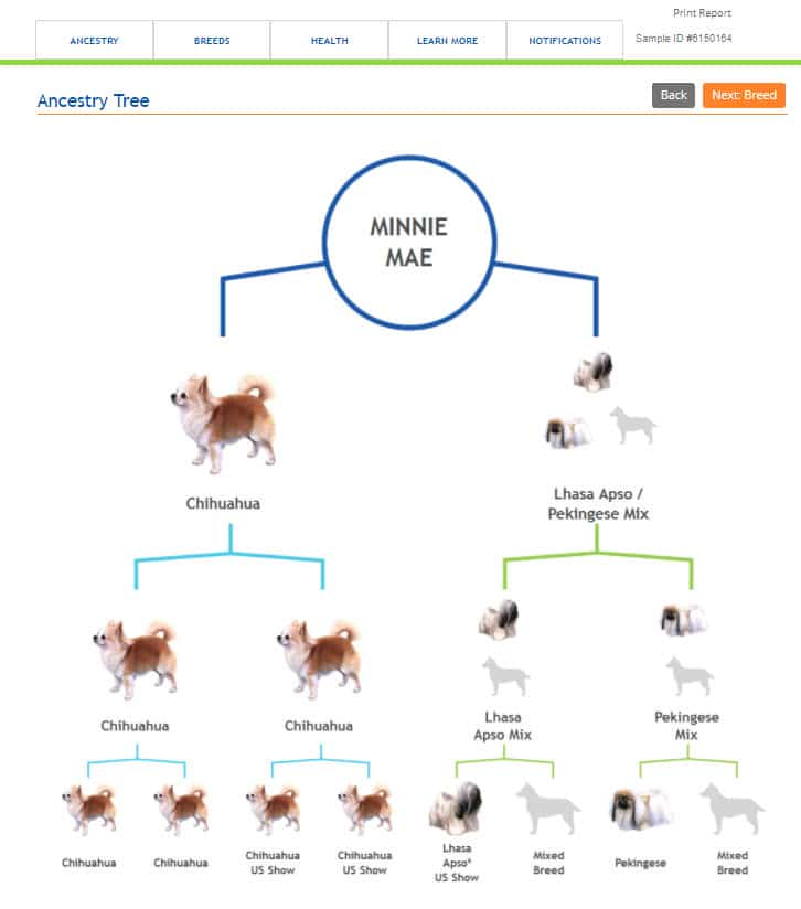 Dog DNA - Wisdom Panel - Minnie Mae