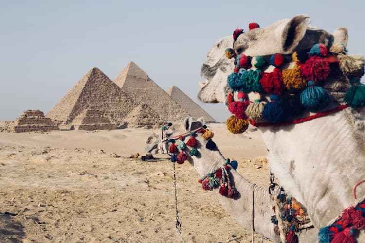 A camel next to a pyramid in Egypt - ohoto by Fynn Schmidt - Upsplash