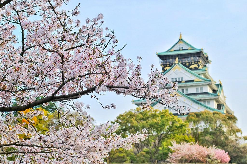 Castle of Osaka - Cherry blossoms