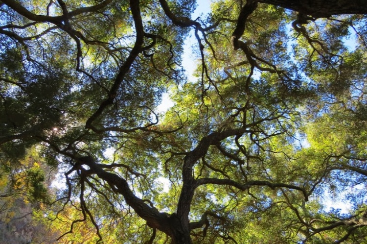 Forest bathing under trees