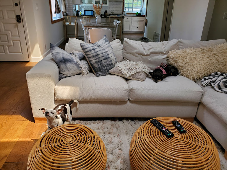 Dogs hanging out