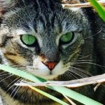 Gardening - cat ornament